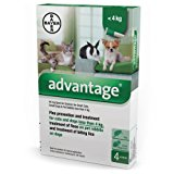 Bayer 84329097 Advantage Spot On Gatto: Amazon.it: Prodotti per animali domestici