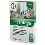 Bayer 84329097 Advantage Spot On Gatto: Amazon.it: Prodotti per animali domestici
