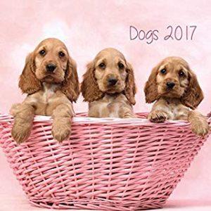 Gruppo Erik Editores Dogs- Calendario 2017, 24 x 24 cm